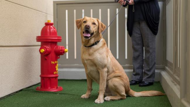 Dog enjoying animal relief area.